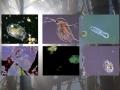 GL Mikroorganismen