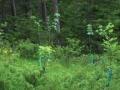 Waldnachwuchs