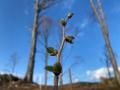 Waldinselprojekt-2-Kopie