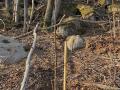 Waldinselprojekt-4-Kopie