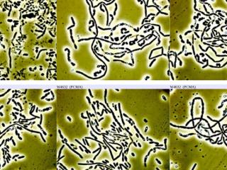 Mikrobiologie/Hirnforschung/Natur